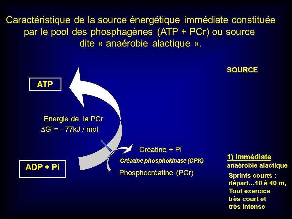 Caractéristique de la source énergétique immédiate constituée
