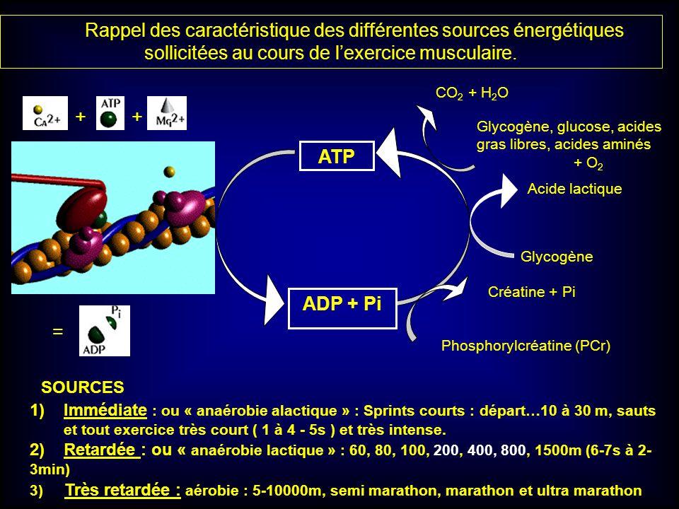 Rappel des caractéristique des différentes sources énergétiques sollicitées au cours de l'exercice musculaire.