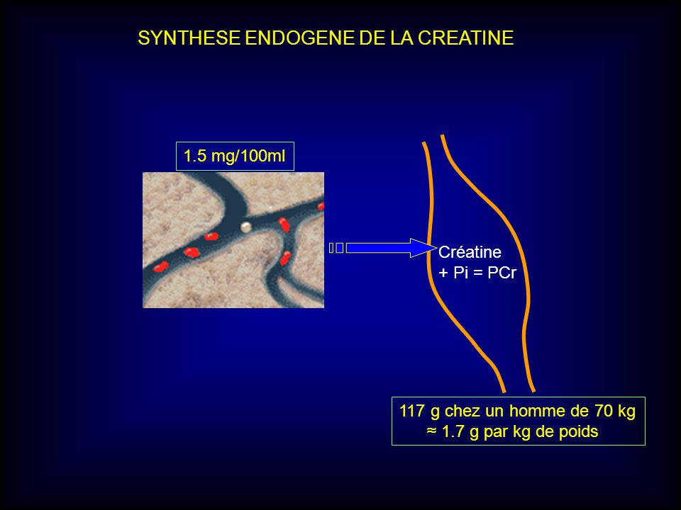 SYNTHESE ENDOGENE DE LA CREATINE