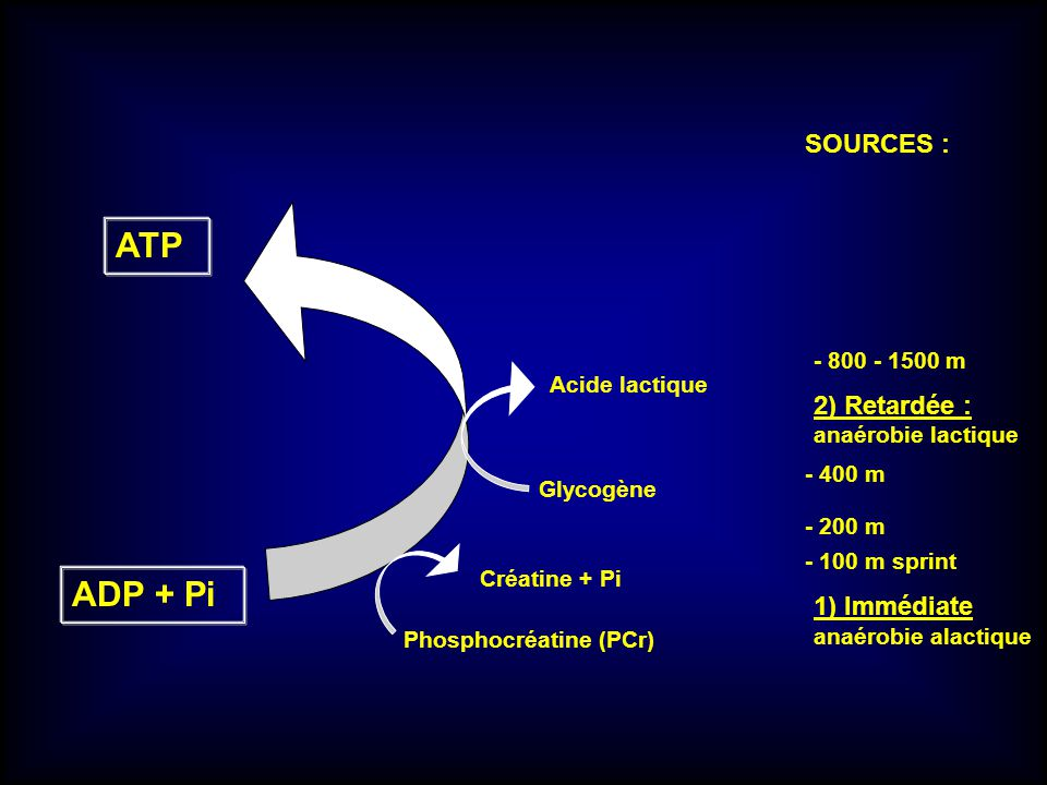 ATP ADP + Pi SOURCES : 2) Retardée : 1) Immédiate - 800 - 1500 m