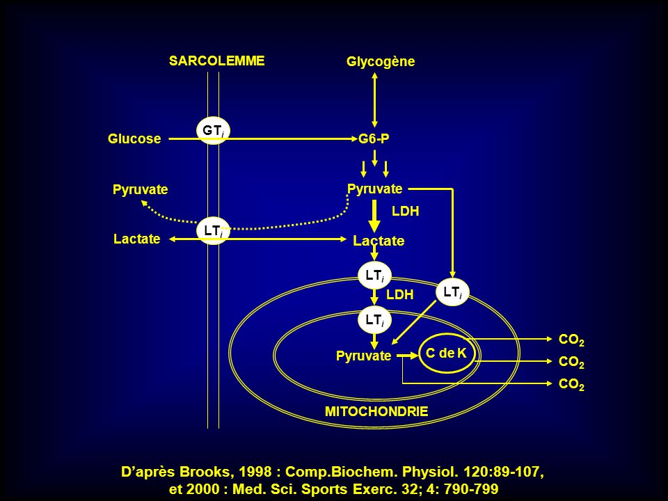 D'après Brooks, 1998 : Comp.Biochem. Physiol. 120:89-107,