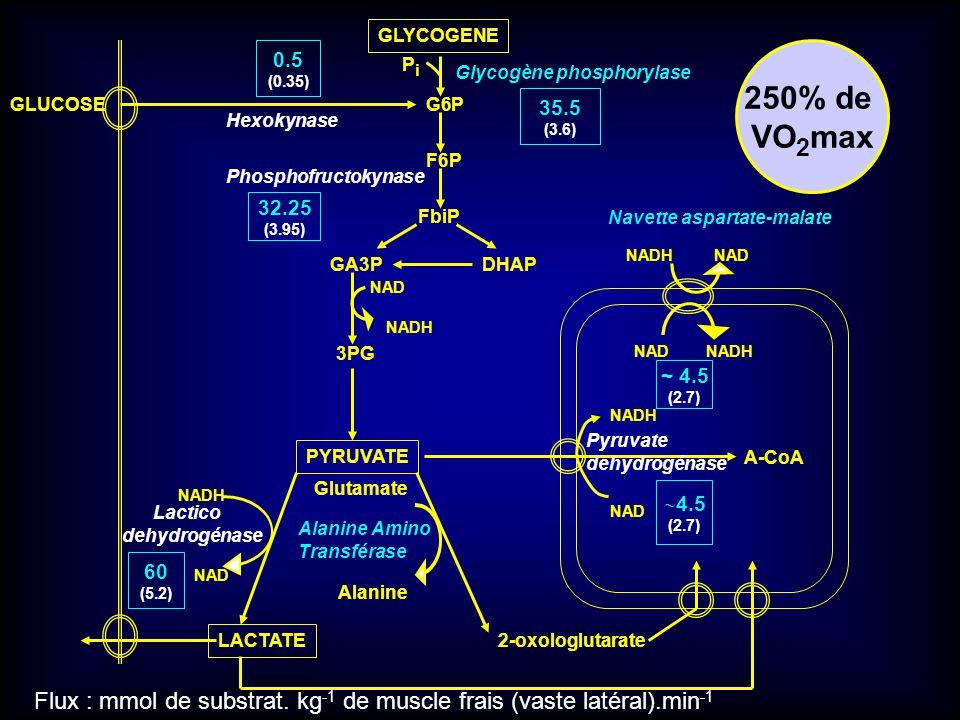 GLYCOGENE 0.5. (0.35) 250% de. VO2max. Pi. Glycogène phosphorylase. GLUCOSE. G6P. 35.5. (3.6)