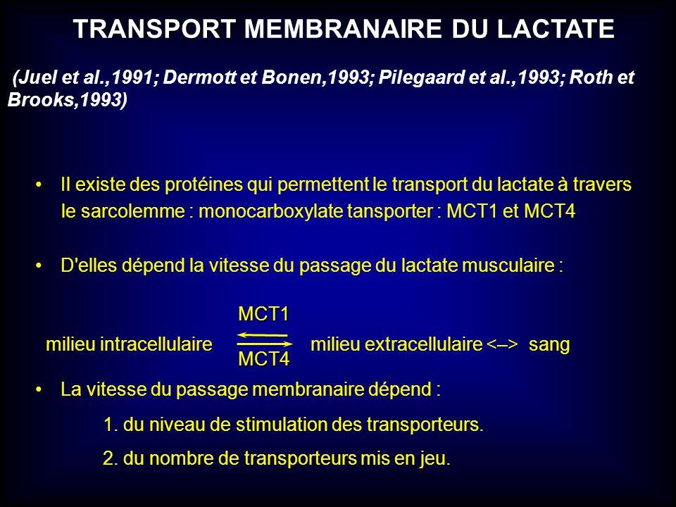 TRANSPORT MEMBRANAIRE DU LACTATE