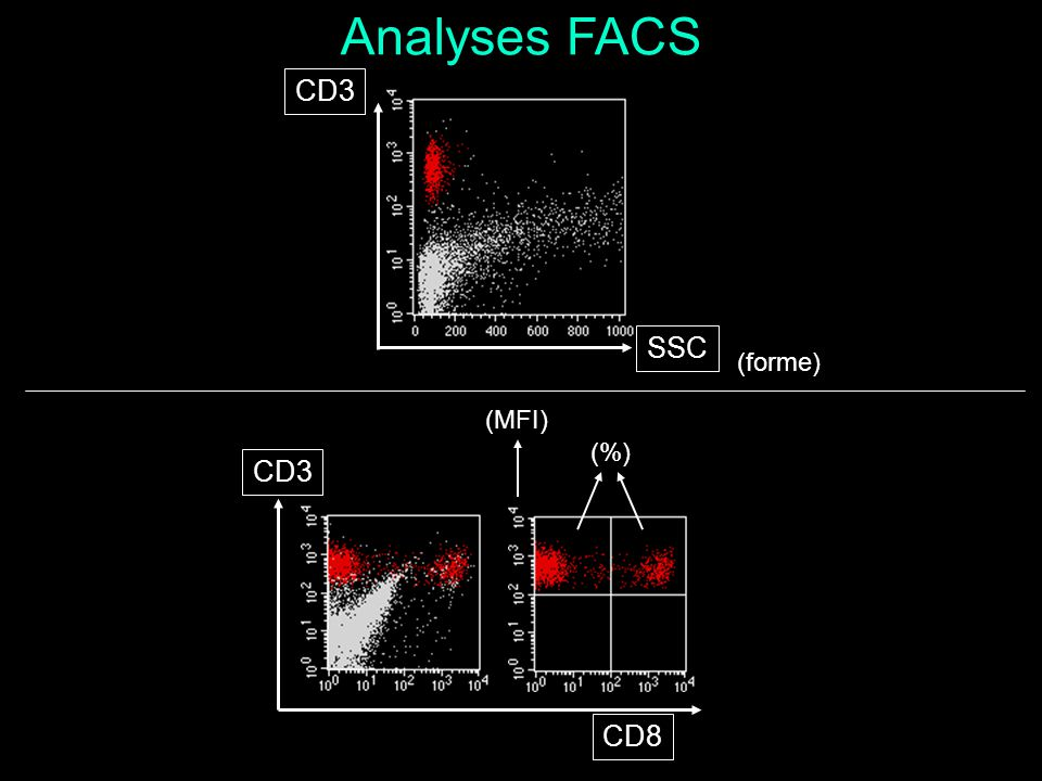 Analyses FACS CD3 SSC (forme) (MFI) (%) CD3 CD8