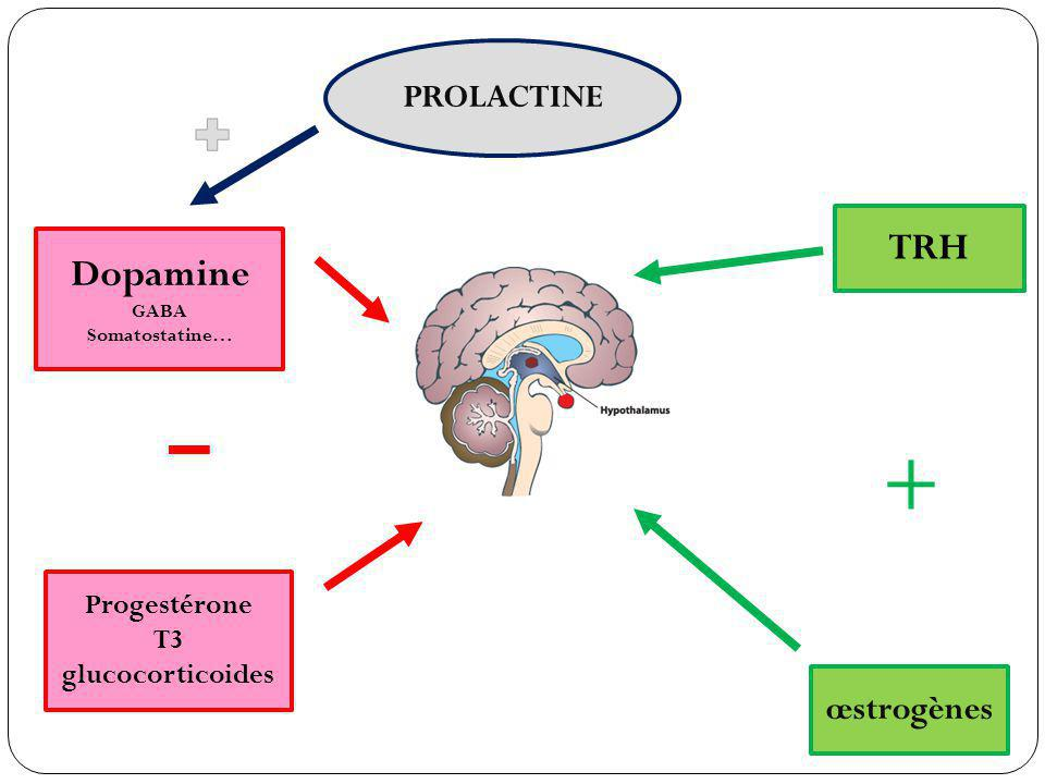 TRH Dopamine PROLACTINE œstrogènes Progestérone T3 glucocorticoides