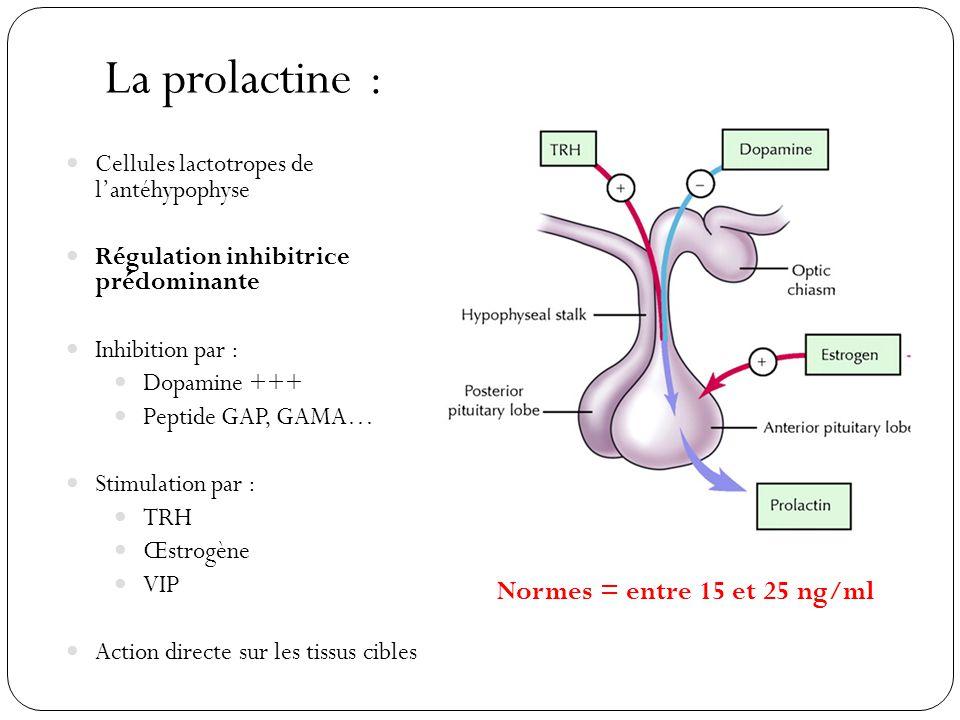 La prolactine : Normes = entre 15 et 25 ng/ml
