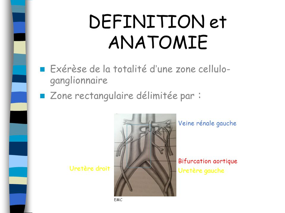 DEFINITION et ANATOMIE