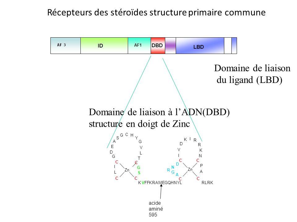 Récepteurs des stéroïdes structure primaire commune