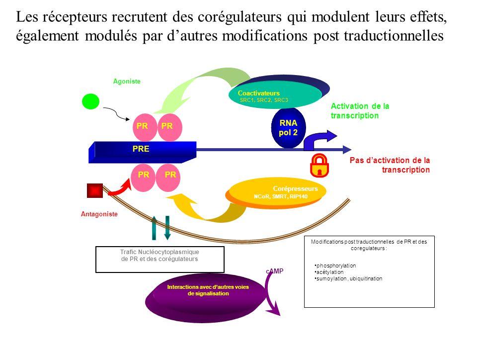 Les récepteurs recrutent des corégulateurs qui modulent leurs effets,