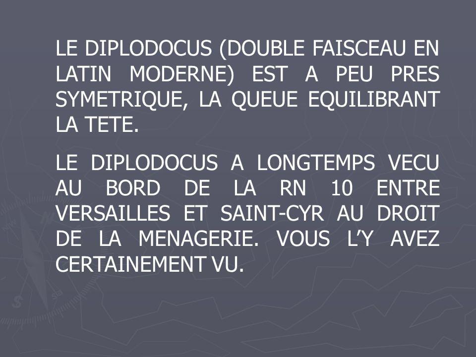 LE DIPLODOCUS (DOUBLE FAISCEAU EN LATIN MODERNE) EST A PEU PRES SYMETRIQUE, LA QUEUE EQUILIBRANT LA TETE.