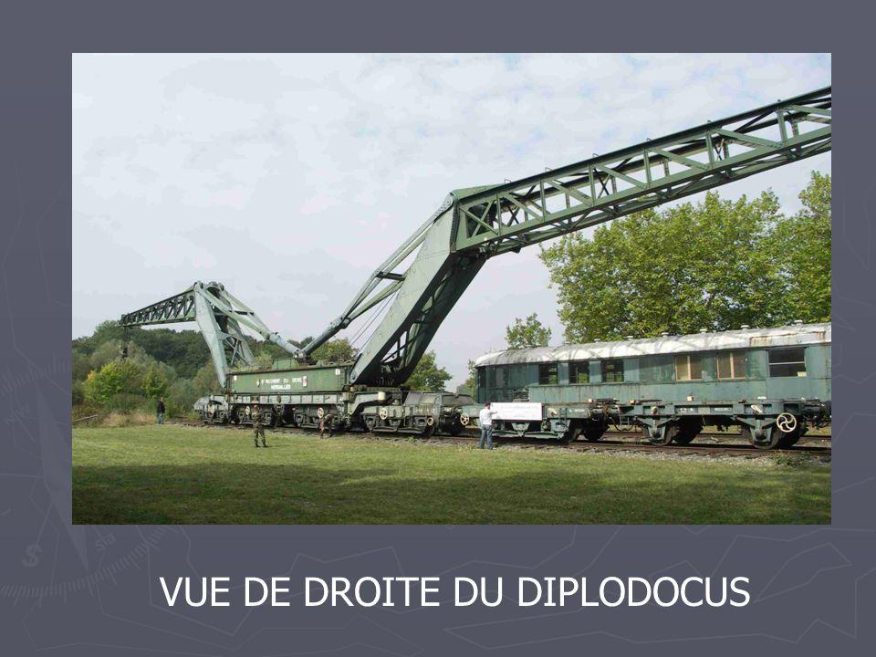 VUE DE DROITE DU DIPLODOCUS