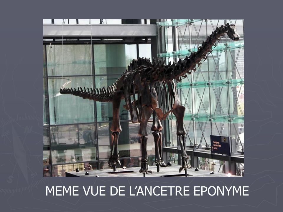 MEME VUE DE L'ANCETRE EPONYME