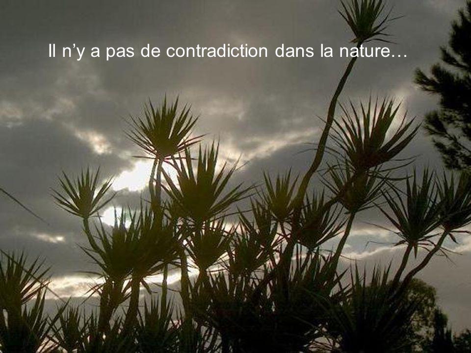 Il n'y a pas de contradiction dans la nature…