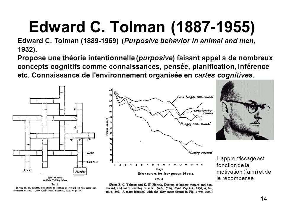 Edward C. Tolman (1887-1955) Edward C. Tolman (1889-1959) (Purposive behavior in animal and men, 1932).