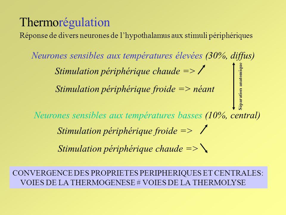 Thermorégulation Réponse de divers neurones de l'hypothalamus aux stimuli périphériques. Neurones sensibles aux températures élevées (30%, diffus)