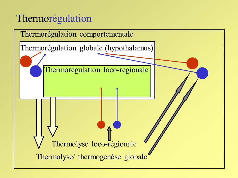 Thermorégulation Thermorégulation comportementale