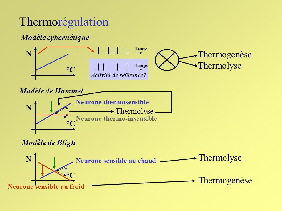 Thermorégulation Thermogenèse Thermolyse Thermolyse Thermogenèse