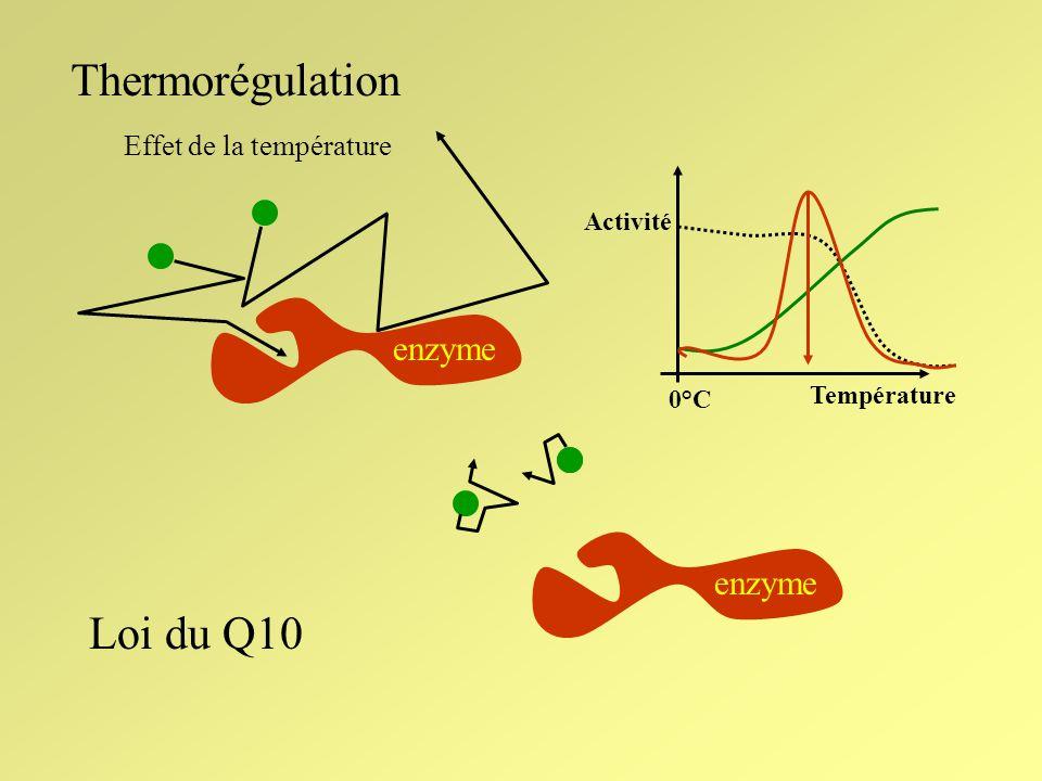 Thermorégulation Loi du Q10 enzyme enzyme Effet de la température