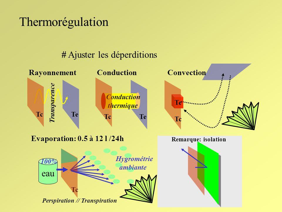 Thermorégulation # Ajuster les déperditions eau Convection Rayonnement