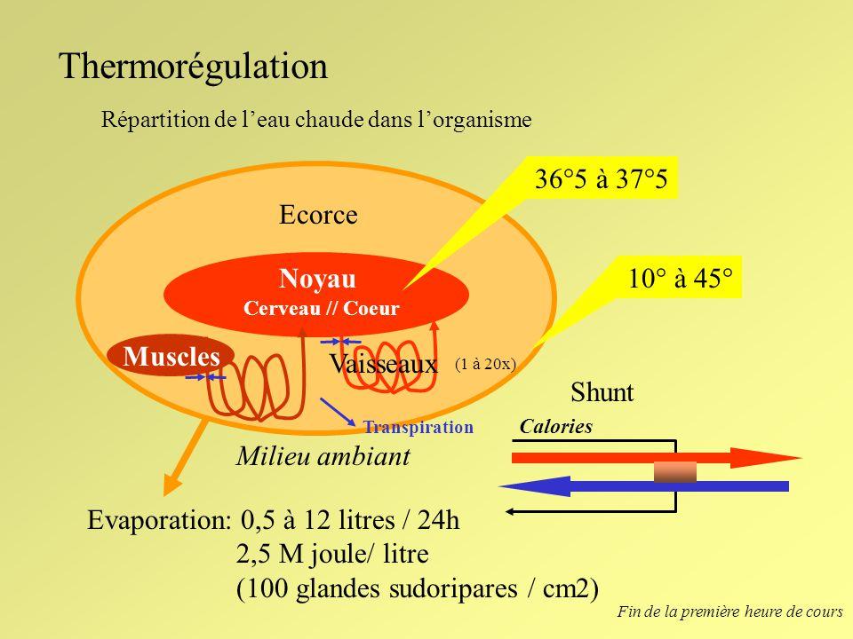 Thermorégulation 36°5 à 37°5 Ecorce Noyau 10° à 45° Muscles Vaisseaux