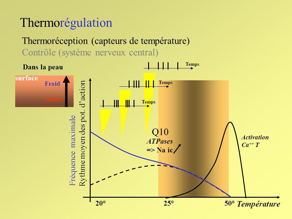Thermorégulation Thermoréception (capteurs de température)