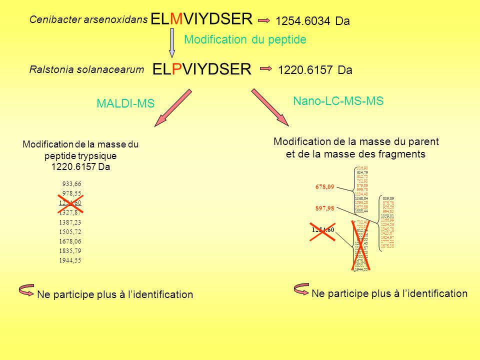 ELMVIYDSER ELPVIYDSER 1254.6034 Da Modification du peptide