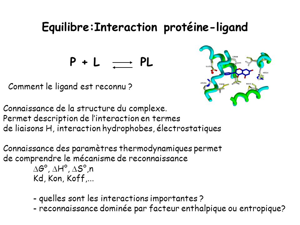Equilibre:Interaction protéine-ligand