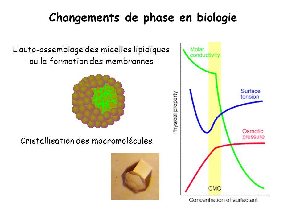 Changements de phase en biologie