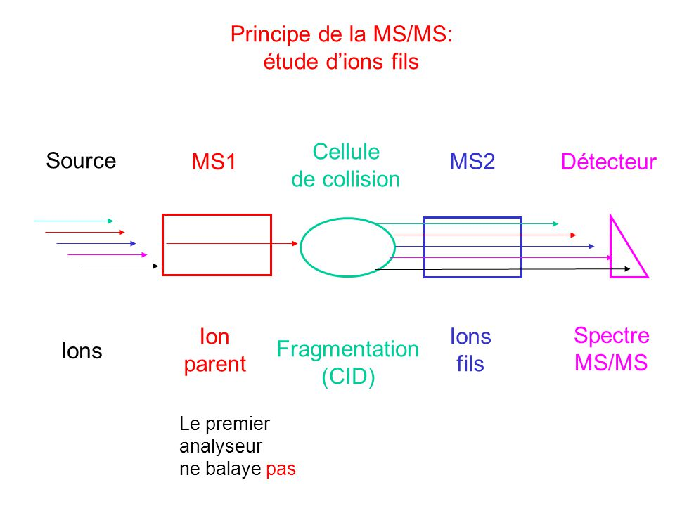 Principe de la MS/MS: étude d'ions fils Cellule de collision Source
