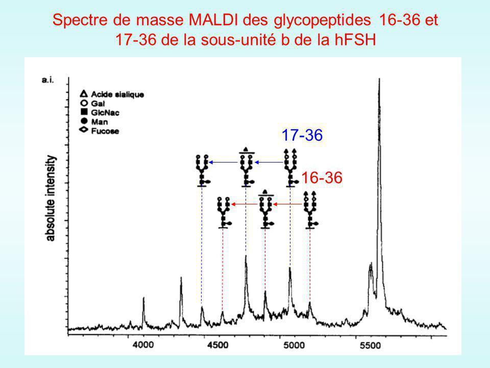 Spectre de masse MALDI des glycopeptides 16-36 et 17-36 de la sous-unité b de la hFSH