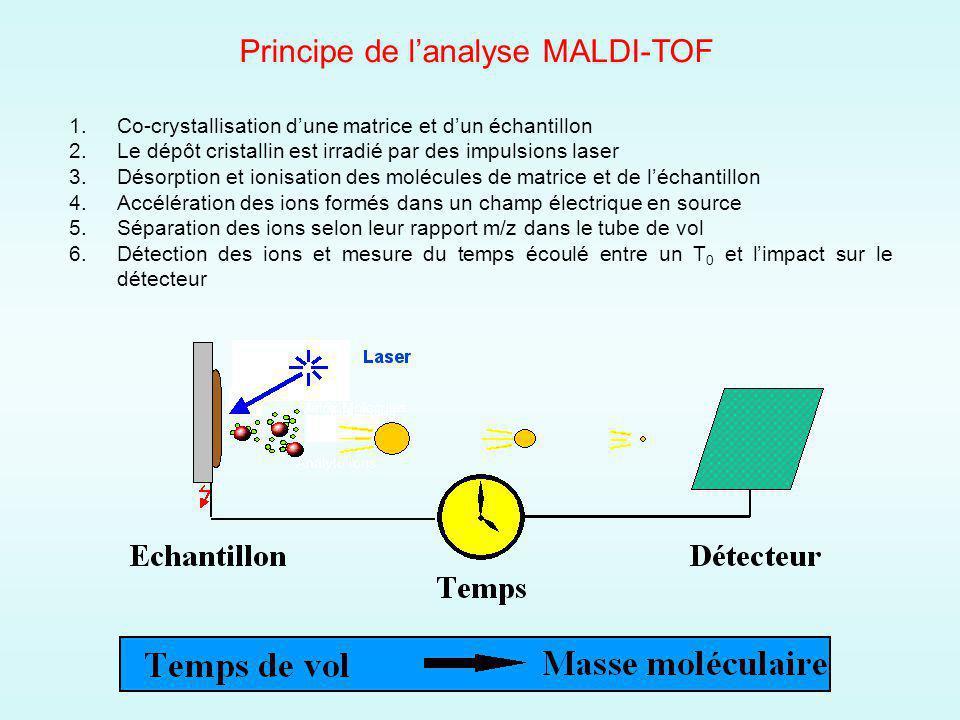 Principe de l'analyse MALDI-TOF