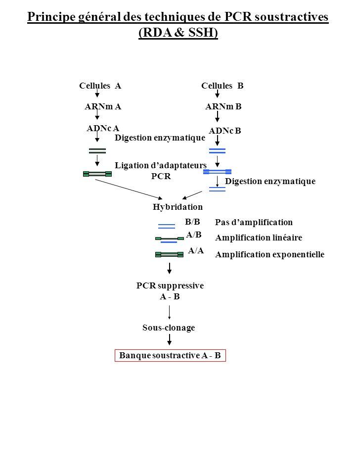Principe général des techniques de PCR soustractives (RDA & SSH)