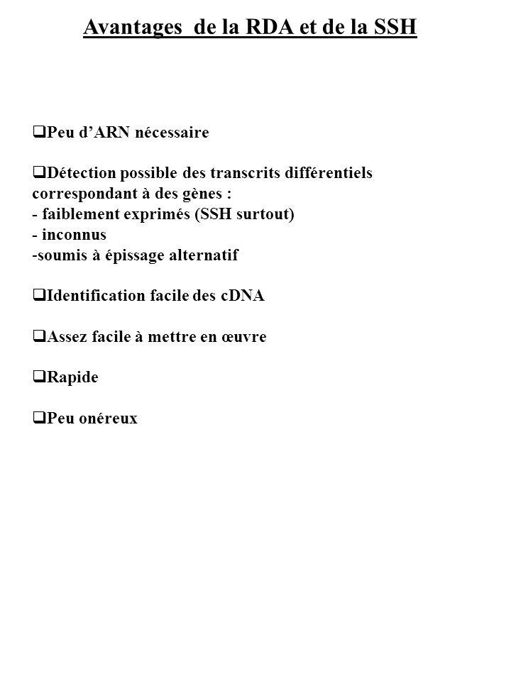 Avantages de la RDA et de la SSH