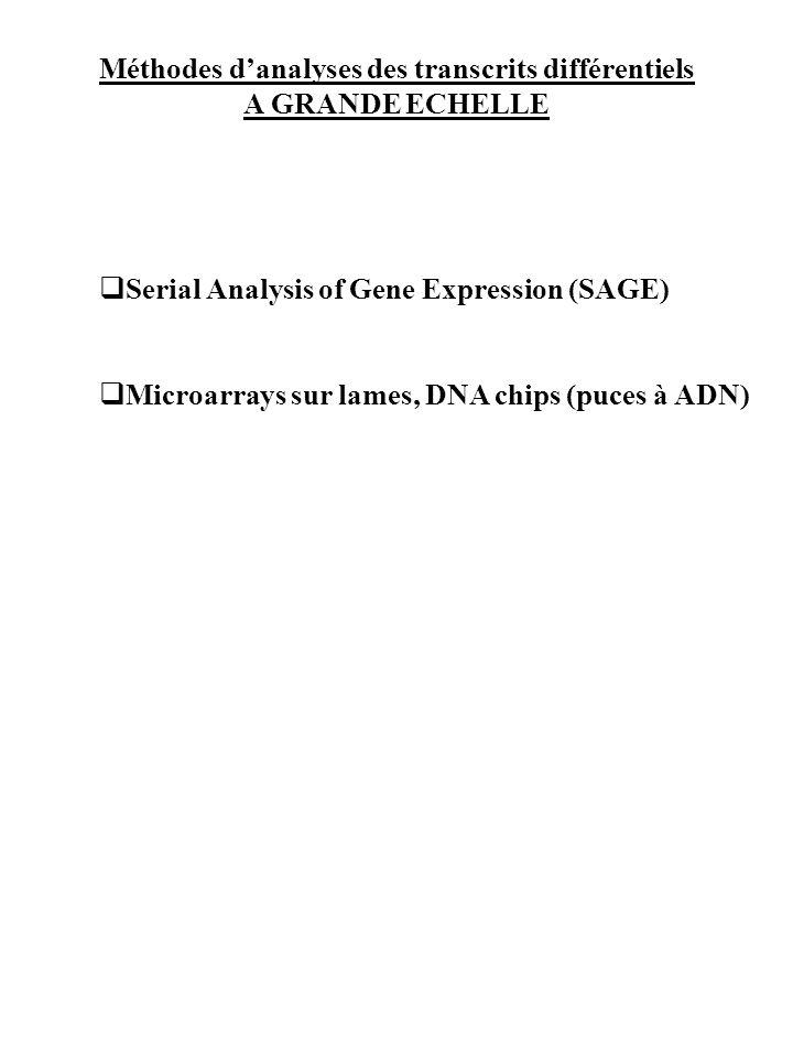 Méthodes d'analyses des transcrits différentiels