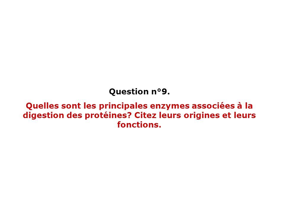 Question n°9. Quelles sont les principales enzymes associées à la digestion des protéines.
