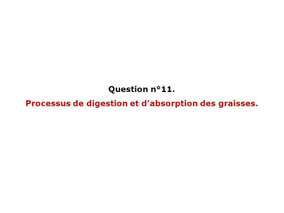 Processus de digestion et d'absorption des graisses.