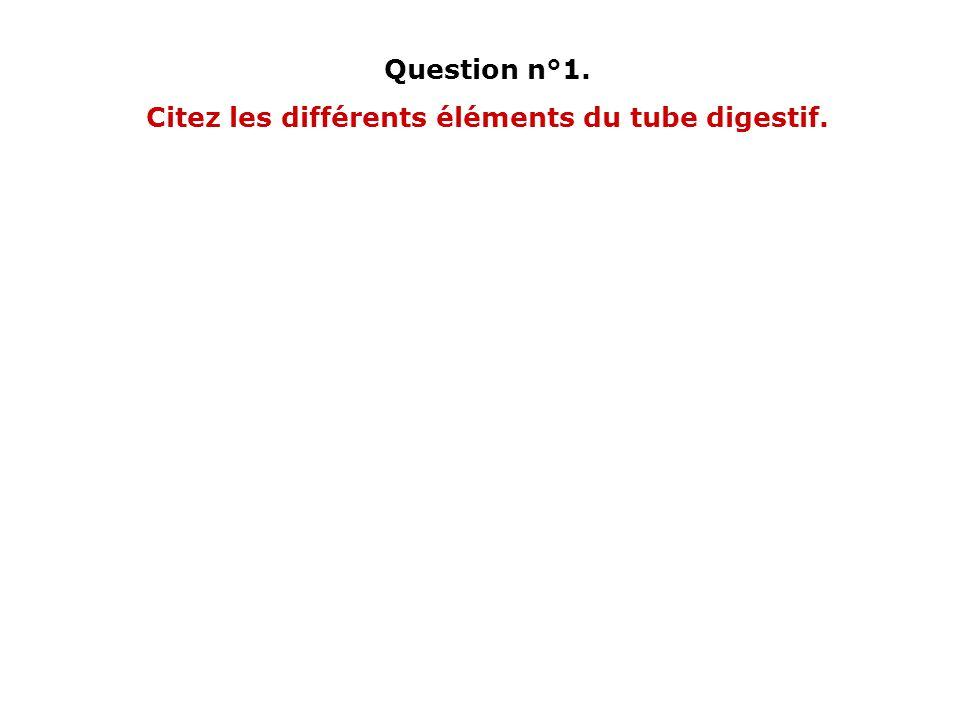 Citez les différents éléments du tube digestif.