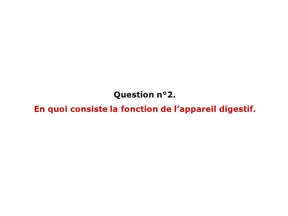 En quoi consiste la fonction de l'appareil digestif.