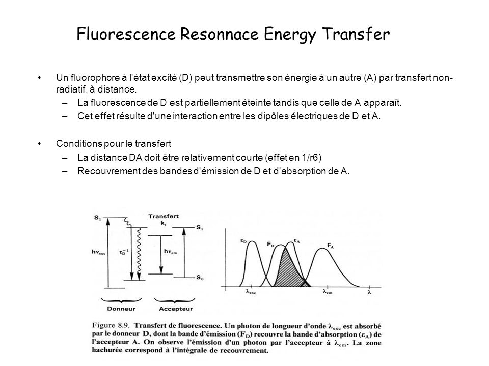 Fluorescence Resonnace Energy Transfer