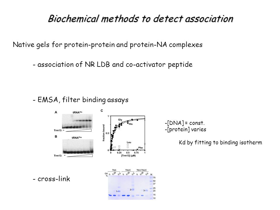 Biochemical methods to detect association