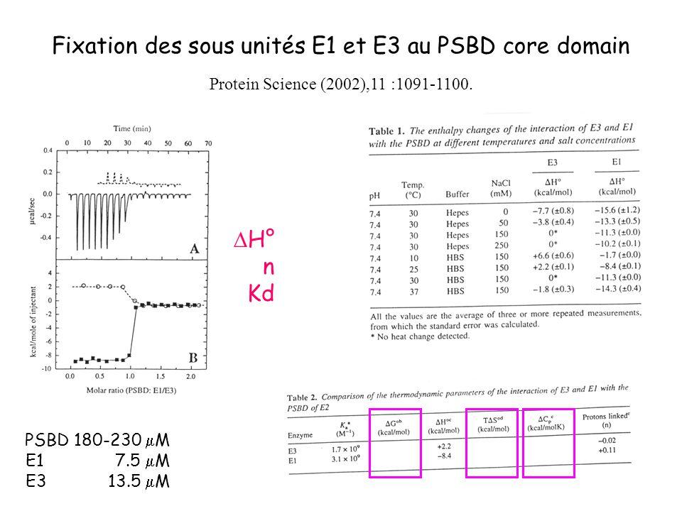 Fixation des sous unités E1 et E3 au PSBD core domain