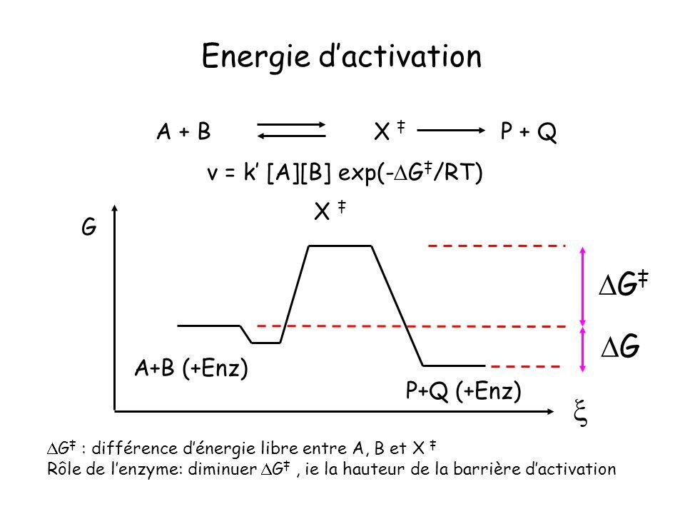 Energie d'activation DG‡ DG  A + B X ‡ P + Q