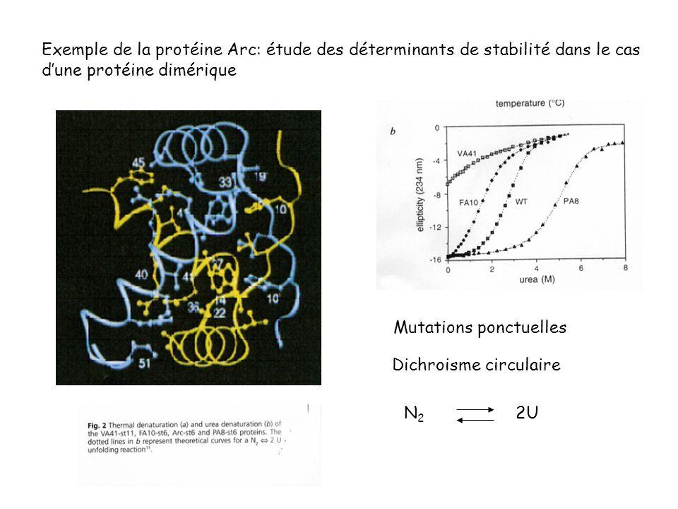 Exemple de la protéine Arc: étude des déterminants de stabilité dans le cas d'une protéine dimérique