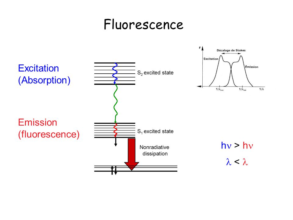 Fluorescence Excitation (Absorption) Emission (fluorescence)