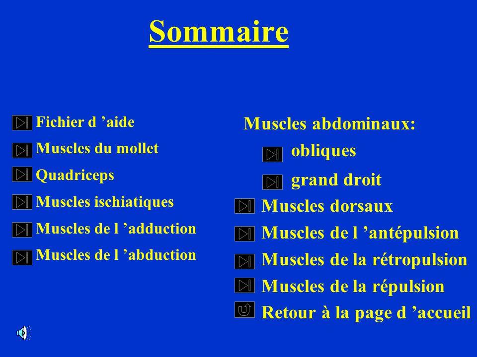 Sommaire Muscles abdominaux: obliques grand droit Muscles dorsaux