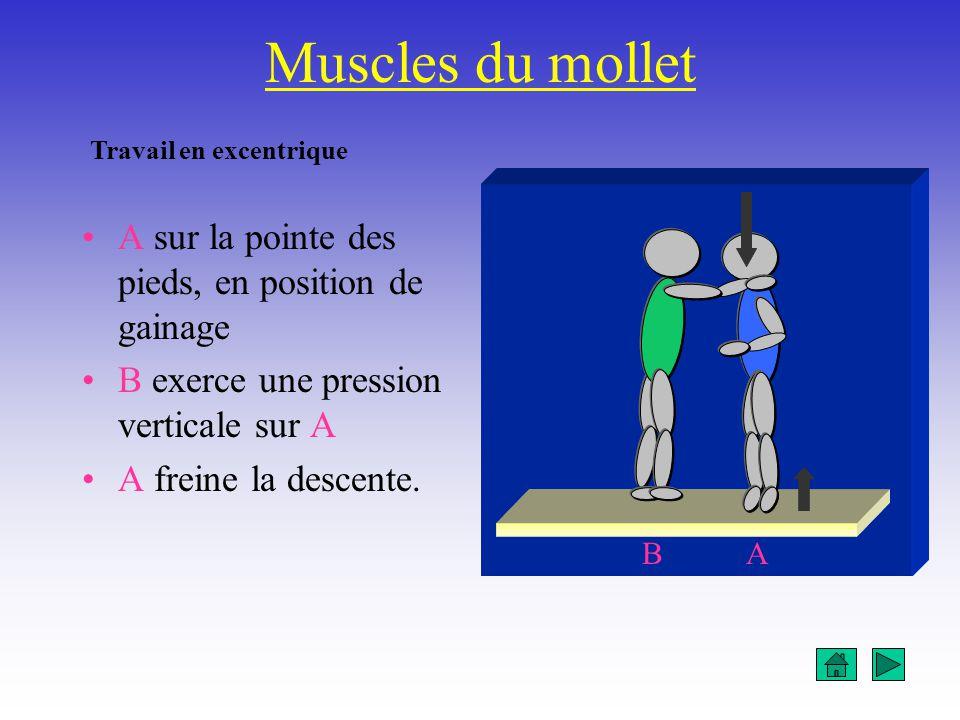 Muscles du mollet A sur la pointe des pieds, en position de gainage