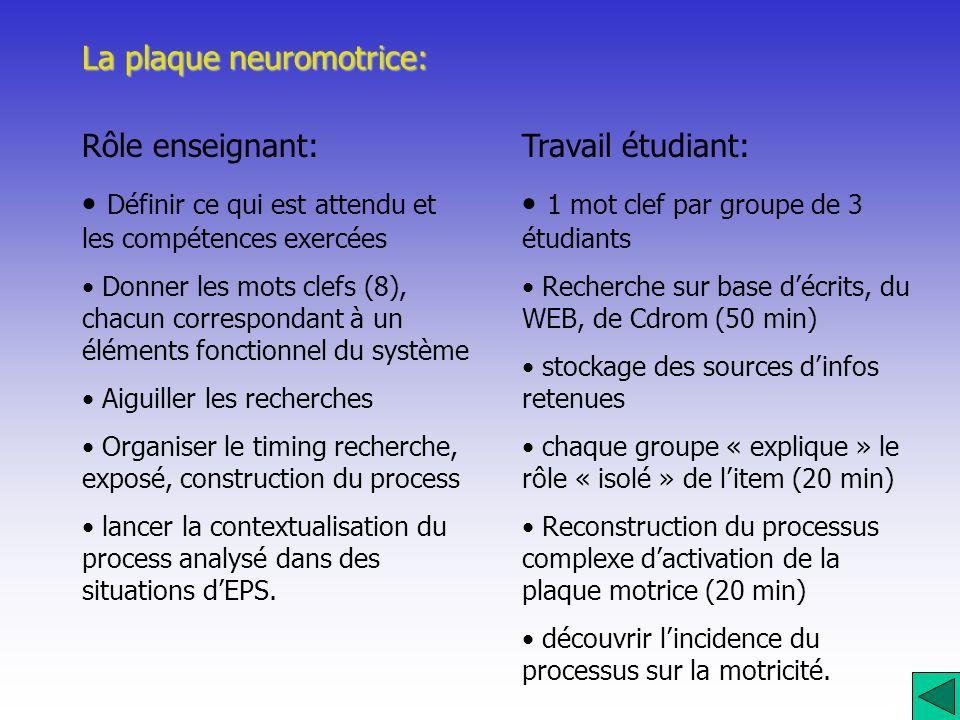 La plaque neuromotrice: