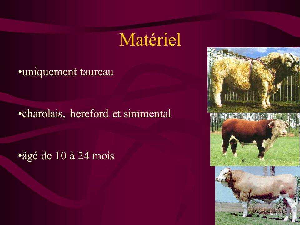 Matériel uniquement taureau charolais, hereford et simmental