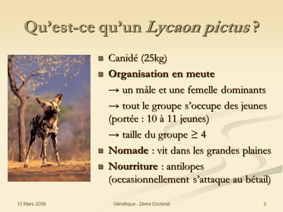 Qu'est-ce qu'un Lycaon pictus