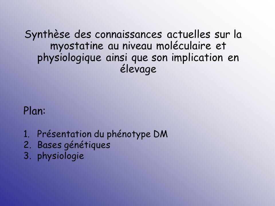 Synthèse des connaissances actuelles sur la myostatine au niveau moléculaire et physiologique ainsi que son implication en élevage